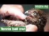 Little Owl Freed From Tennis Netting!