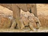 Elephant Herd Helps Rescue A Calf That's Stuck In A Waterhole