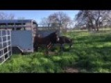 Watch Arizona Donkey's See Grass For First Time