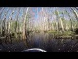 Jet Skiing In The Swamp