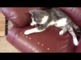 Clever Cat Take Commands For Food!