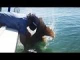 Huge Grouper Gets Revenge Slap On Kayak Angler