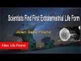 Scientists Find First Extraterrestrial Life Form - Alien Seed Found