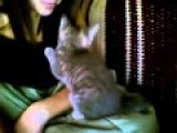 Some Cats Known How To Scam A Kiss