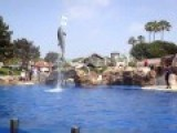 Jumping, Dolphin