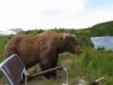 One Camper's Incredible Encounter With An Alaskan Brown Bear