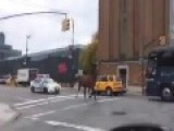 Cops Chasing Horse In NYC