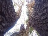 Raccoon Throws Camera Out Of Tree