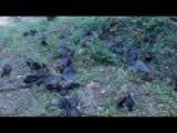 100,000 Dead Bats Fell From The Sky In Australia