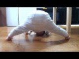 Funny Videos Babies Do Some Gymnastics Funny
