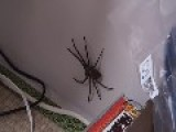 *# MONSTER SPIDER WELCOMES JAPANESE FAMILY #*