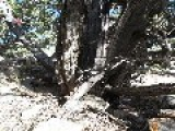 132-year-old Winchester Rifle Found Propped Against Tree In Great Basin National Park