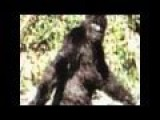 1 Of 82 Patterson Gimlin Bigfoot Best Clips Film 2009