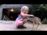 A Little Girl Plays With A Curious Fawn