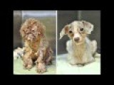 16 Incredible Transformations Of Neglected Dogs