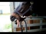 1 Horse Wants To Clap 2 Doesn't Have Hands 3 Claps With Mouth