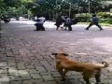 Motorbike Fail In India