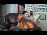 Velcro Dog Wants To Cuddle, Woman Wants To Read