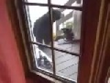 Bear Vs Cat