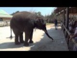 Dancing Elephant - Gangnam Style