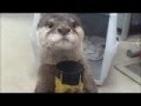 BEST FUNNY ANIMALS COMPILATION 2013 - 2014