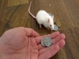 Smart Mouse Buys Herself A Treat