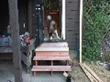 Dog Scared Of New Stairs