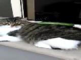 Cat And Cucumber Make Instant Friends