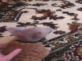 Cat Hates Cone Of Shame
