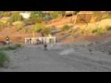 Dog Race Crash