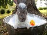 Cute Bunny Takes A Bath
