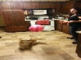 Dexter The Dog Is Baffled By A Balloon