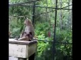 CUTE Baby Baboon Hangs Out With Mum In Miami