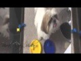 Hear Melodious Musical Dog