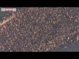 35,000 Walruses Seen In Alaska Footage