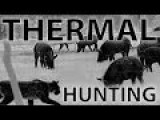 Best Thermal Night Hunting Videos With The REAP-IR