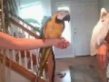 Parrot Dance Group