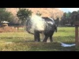 Elephant Broke The Sprinkler And Enjoys The Moment