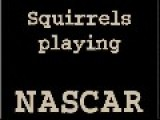 Squirrels Playing NASCAR