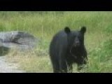 Black Bear Stops To Visit A Few Fishermen