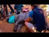 Saving A Baby Rhino With CPR