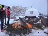 4 Tonne Elephant Seals Crush A Cameraman's Tent