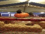Little Girl Flies Off Pumpkin Ride