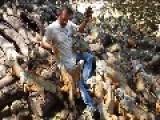 500 Iguanas Swarm Man For Food