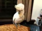 Parrot Dancing Gangnam Style