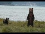 5 Minutes Of Grizzly Bear Watchin'