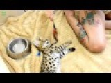 Cute Exotic Animal Baby Compilation 2014 HD