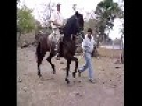 The Cruelty Of Teaching Horses How To Dance