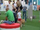 Dubai Dogs Get Own Air-conditioned Park And Pool
