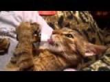 Cute Cat - Nom Nom Nom Nommnmnm Noomm